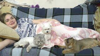Ариела ранила Мишу! Кевин и Бил пробуют креветку | Сладун в ШОКЕ!