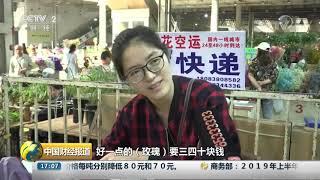 [中国财经报道]云南:七夕带火玫瑰花价| CCTV财经