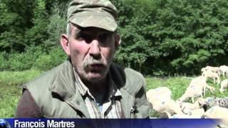 Sécheresse : en Ariège, la transhumance était attendue