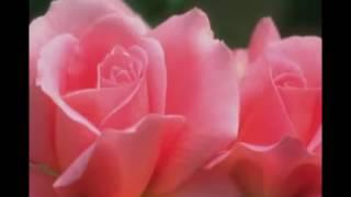 Rasheed Ahmad Faridi Qawwal --Husne Qatil Ney Ajab Rang  -1.flv