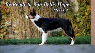 Reisy Border Collie / 10 months