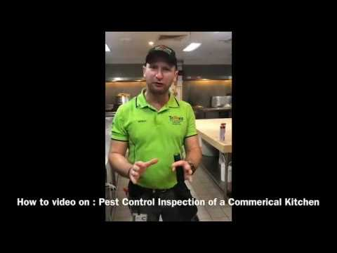 How to do a General Pest Control Inspection in a Commercial Kitchen for restaurants or cafes.