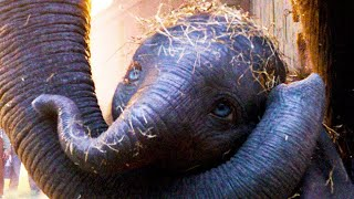 "DUMBO ""Baby Elephant"" Clip"