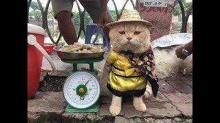 Du lịch khám phá chợ bán chó mèo lớn nhất đất cảng