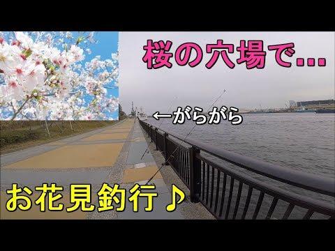 【有明西ふ頭公園】超満開!?桜咲く都内の海釣り公園で初春のお花見釣行!…のはずが【2019.03.25】