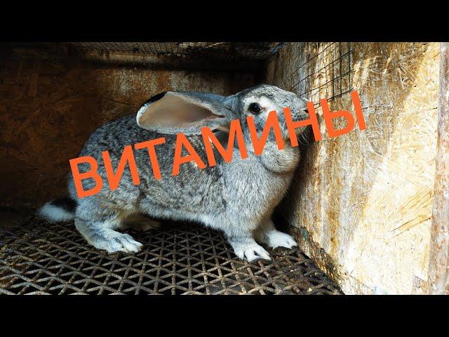 Витамины для кроликов //Жизнь в деревне!!!