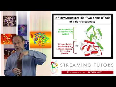 Biochemistry   Protein Tertiary and Quaternary Structure tutorial