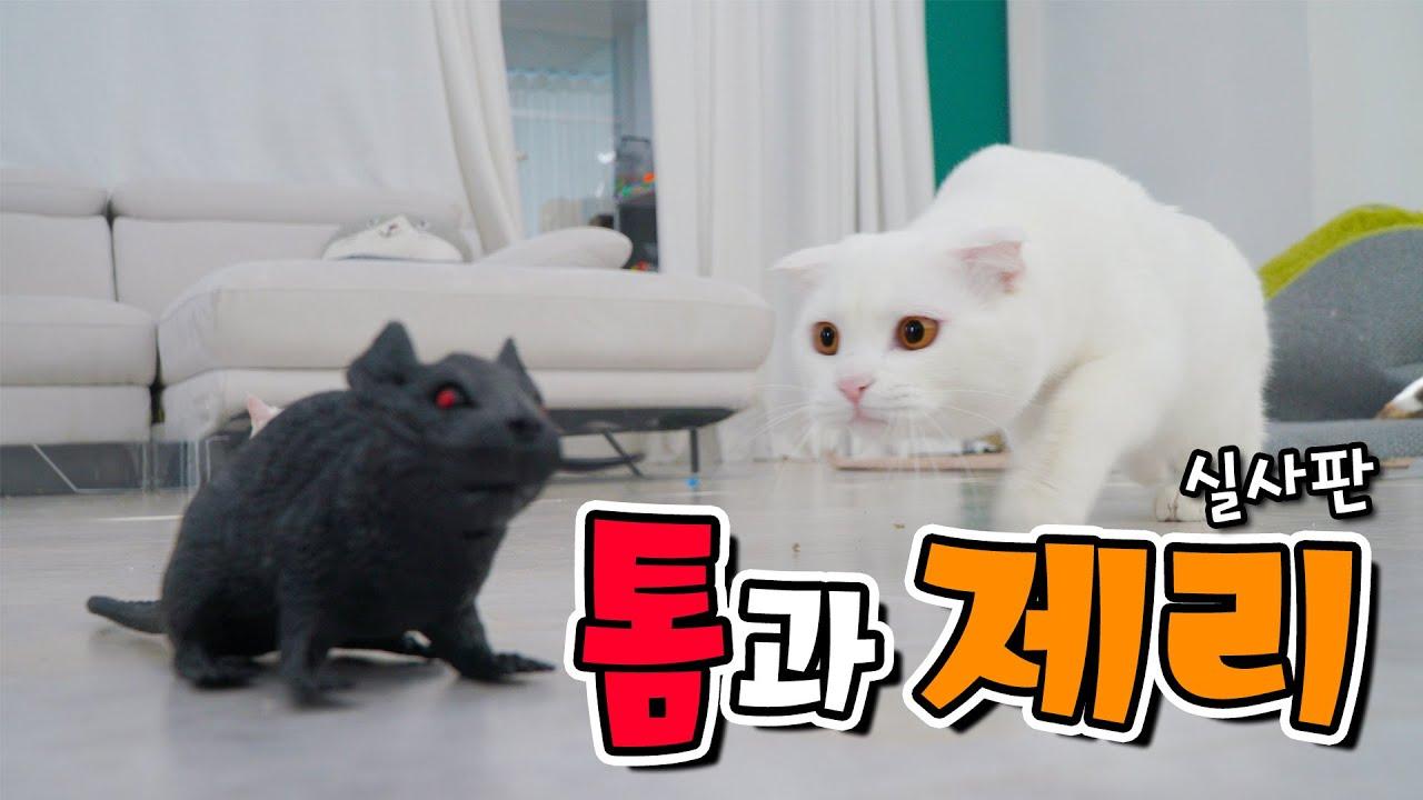 고양이는 정말 쥐를 잡을 수 있을까요? | 고양이산책
