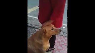 Give Me Head Pets, Human    ViralHog