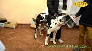 Выставка собак, Харьков, 30 октября 2016, видео 5