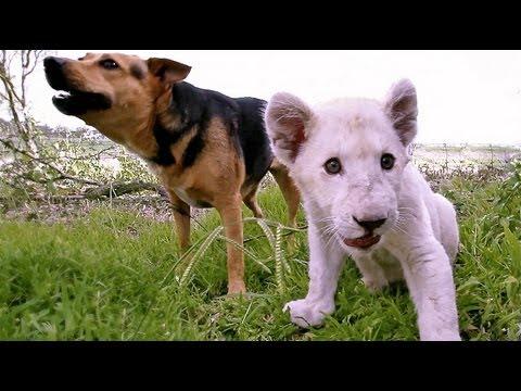 Honey & Kwanza - Dog & Lion Best Friends