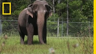 Gambar cover When Ringling Bros. Retires Its Elephants, This is Where They Live | National Geographic