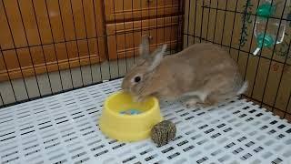 這兔寶好大的脾氣