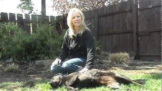 Walkie Doggie & Pet Sitter Company Introduction