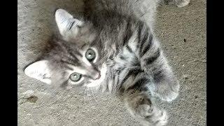 гаражные котята - в добрые руки даром