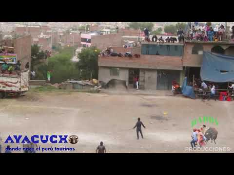 CORRIDA DE TOROS EN BARRIO DE CUCHIPAMPA AYACUCHO 2019 TORO CHIQUITIN DE LA GANADERIA SINCHI