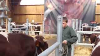 Dressage des taureaux