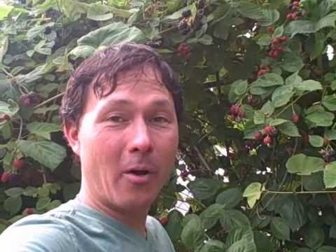 Amazing Urban Permaculture Food Forest Garden with Edible Exploding Impatiens