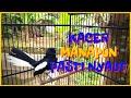 Kacer Gacor Konslet Dor Full Isian Bagus Buat Masteran Yang Macet Bunyi  Mp3 - Mp4 Download