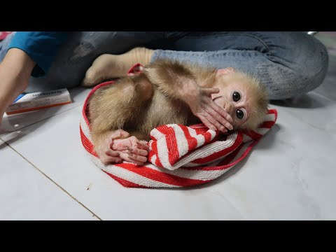 Apply medicine to GON - allergic monkey baby