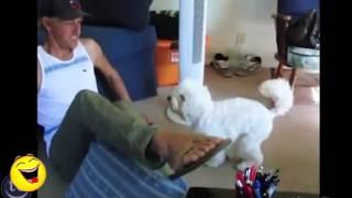 Funny Videos Funny Dogs Videos Pranks Best Funny Pranks Compilation 2014