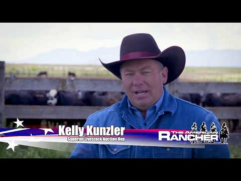 Superior Livestock Auction American Rancher Special