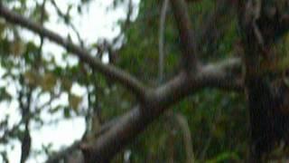 Bẫy họa mi (2) của chaomaoden