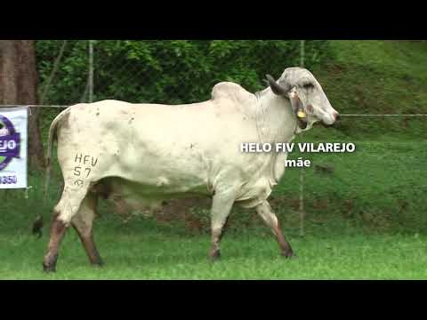 LOTE 12   2091