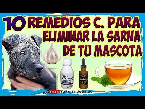 como-curar-la-sarna-de-tu-perro--10-remedios-caseros-para-eliminar-la-sarna-de-tu-mascota-🐶🐱