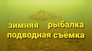 Поклевки окуня зимой Зимняя рыбалка на окуня Подводная съемка зимой на окуня