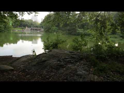 Daniella on Design - Central Park Ramble, Nature by Design