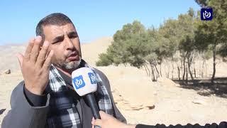 التحطيب يهدد الاحراج في الكرك - (24-1-2019)