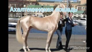Самые красивые лошади мира