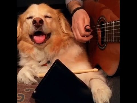 Dog Plays Drums - Best of Trench and Maple Vines pt.1