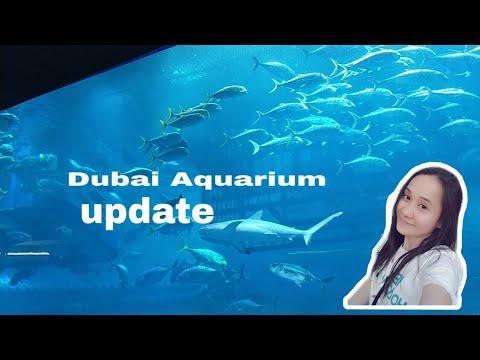 Famous Aquarium in Dubai|Dubai Mall Aquarium 2019