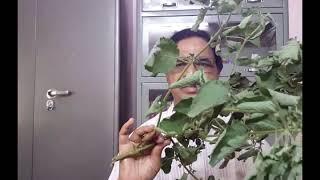 ఉత్తరేణి (వజ్రదంతి) ఔషధ మొక్క ప్రయోజనాలు. Description తప్పక చూడండి.