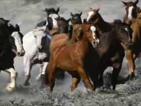 Song for the Tennessee Walking Horse