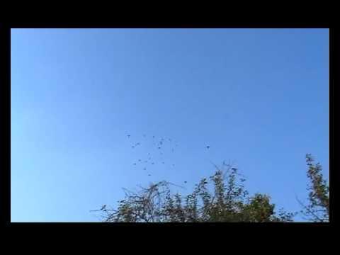 голуби летят над нашей зоной