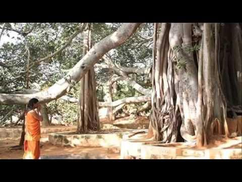 Nirahara Samyama  -  Meditation unter dem Banyan Baum