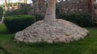 Египет выход с отеля Egypt  Hotel Queen Sharm Resort дорога к McDonald's