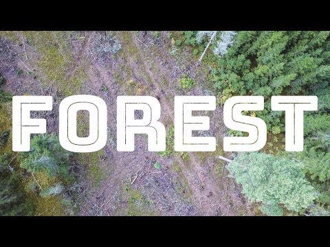 FOREST 2018 Documentary