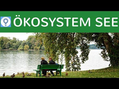 Ökosystem See einfach erklärt: Gliederung, Zonenbereiche, Schichtung & Organismen - Zusammenfassung