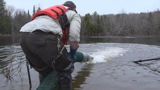 Salmon stocking in northern Maine