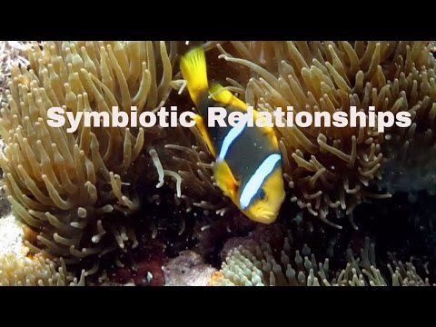Symbiotic Relationships-Definition and Examples-Mutualism,Commensalism,Parasitism