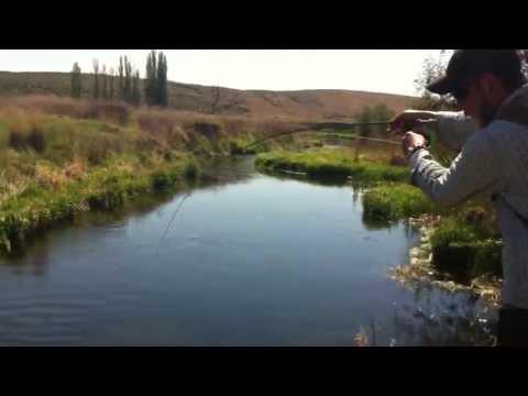 Fly Fishing Crab Creek (Eastern Washington) For Rainbow Trout
