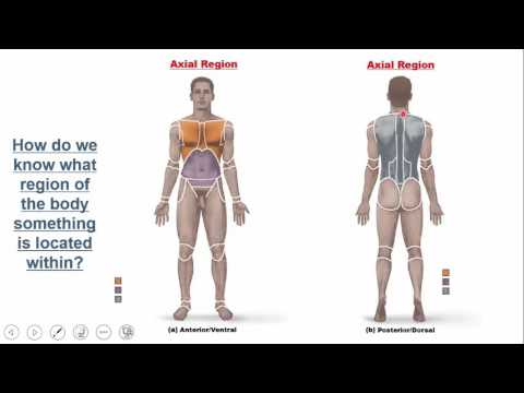 Introduction to the Human Body:  Overview and Gross Anatomy