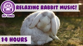 How To Relax my Rabbit! Calming Music For Your Bunny! Your Rabbit Will Sleep Peaceful! 14 Hours!