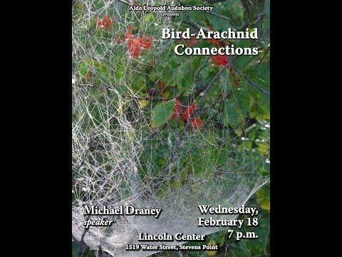 Bird Arachnid Connections by Michael Draney