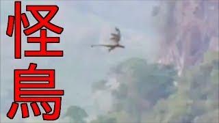 【不思議映像】UMA?翼竜?謎の怪鳥