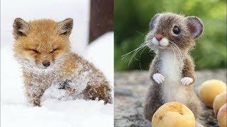 かわいい動物の赤ちゃん - 動物たちのかわいい瞬間【面白い動画】#6